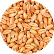 Agronomy membership